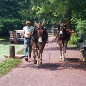 mules pulling canal boat